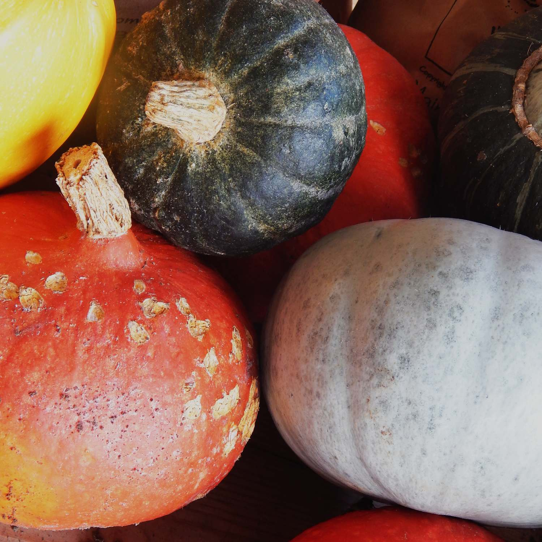 Assortment of pumpkins