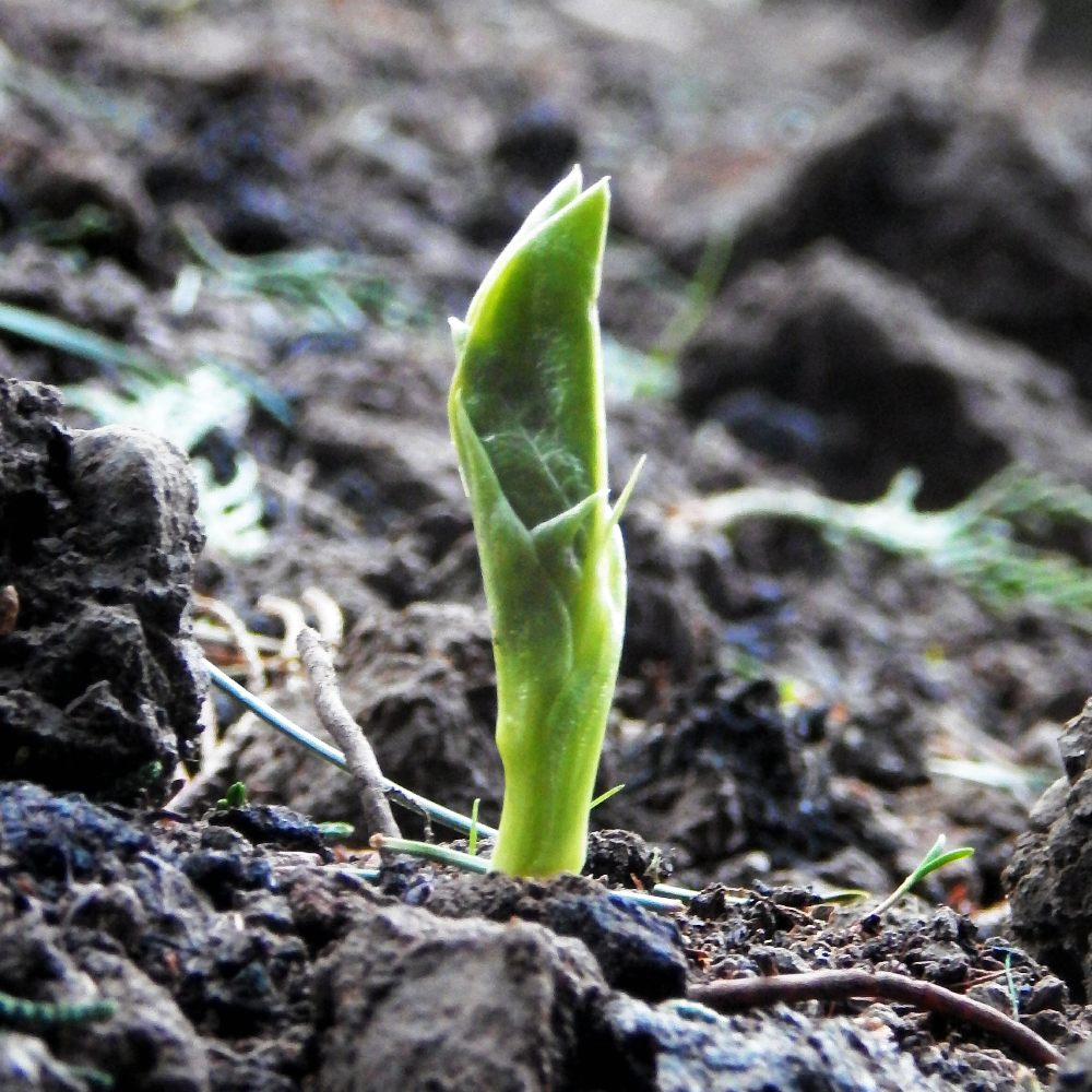 Veg patch diaries: part two – an update on growing vegetables at home